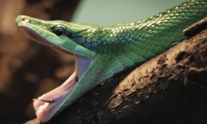 Surviving a Snake Bite