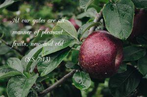 Song of Solomon (Part 11)